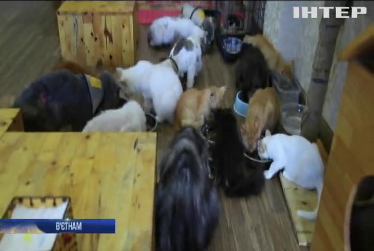 У столиці В'єтнаму запрацювало котокафе і притулок для покинутих тварин