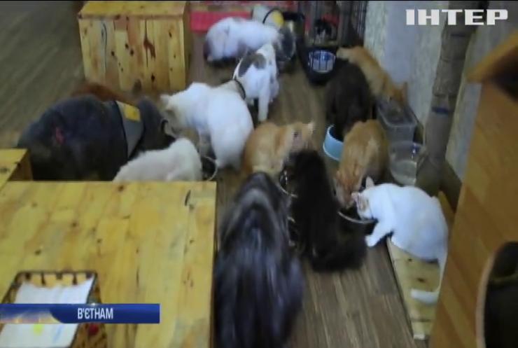 У В'єтнамі з'явилося кафе покинутих котів