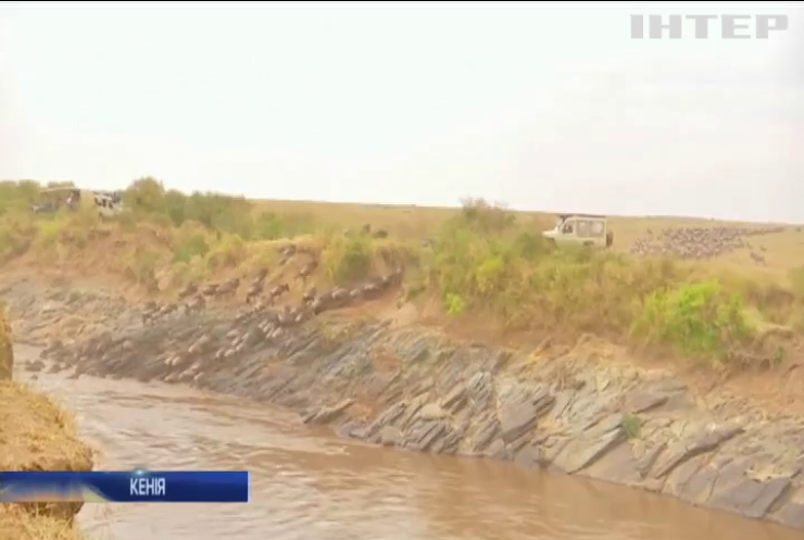 У Кенії почалась велика міграція тварин