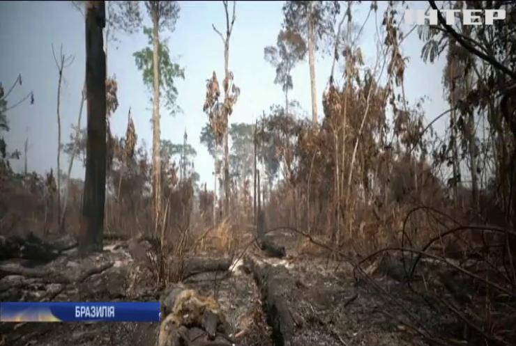 Пожежі в Амазонії: від Бразилії вимагають активніше рятувати ліси
