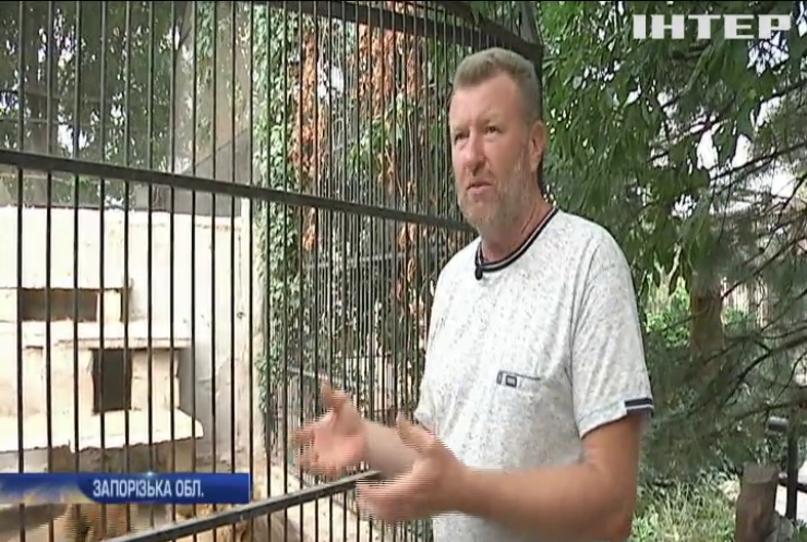 36 днів у клітці з левом: чи готовий власник Василівського звіринця побити власний рекорд?