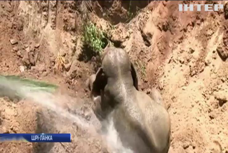 На Шрі-Ланці врятували від смерті слоненя