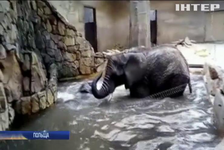 Слонів у Варшавському зоопарку рятуватимуть від стресу канабісом