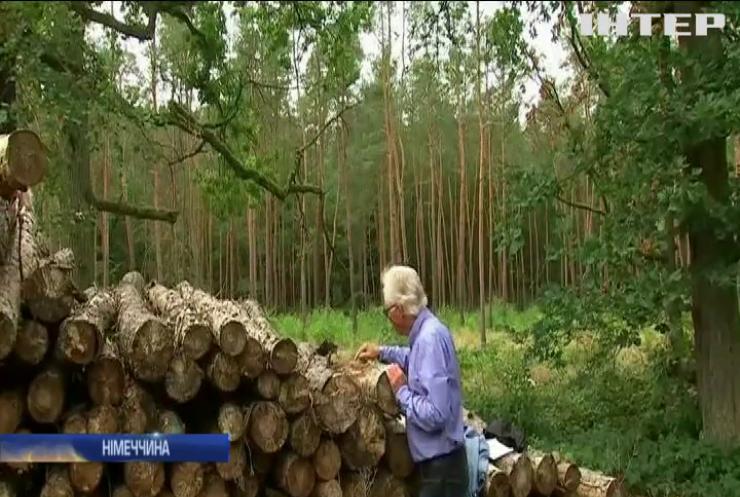 У Німеччині привчають дерева до зміни клімату