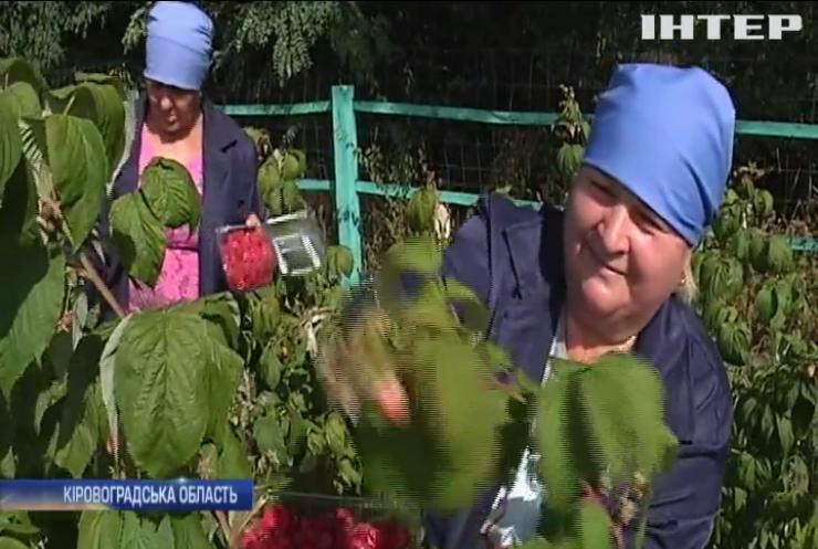 Сезонна робота: у Євросоюзі з нетерпінням чекають українських заробітчан