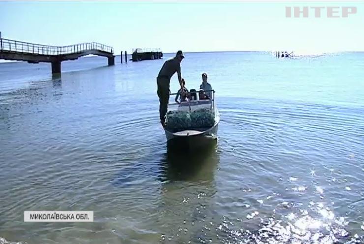 Унікальний екологічний проєкт: на Кінбурнській косі взялися очищати море