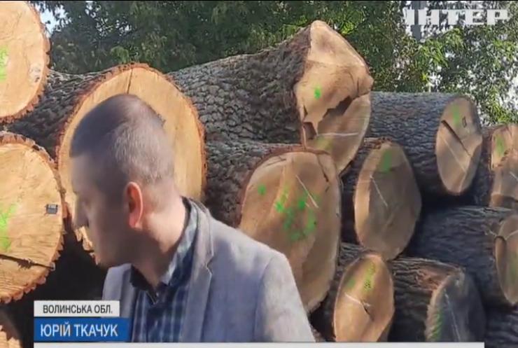 У Луцьку переробляли крадену деревину та відправляли до Європи