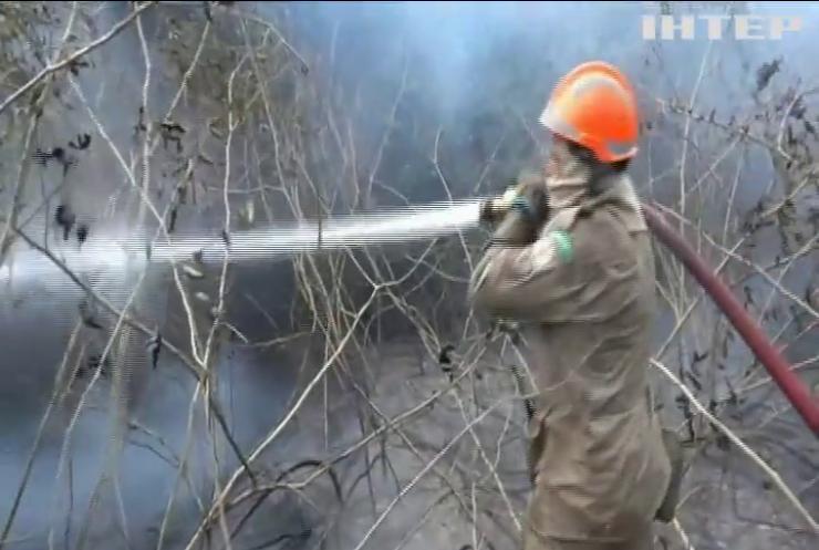 Лісові пожежі у Бразилії загрожують популяції ягуарів