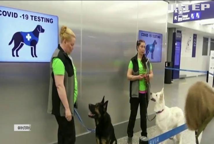 В аеропорту Гельсінкі хворих на коронавірус виявляють собаки
