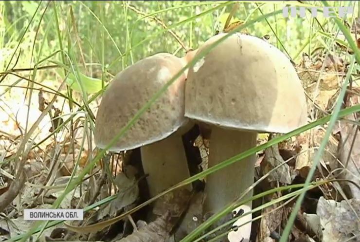 """В Україні стартував сезон """"тихого полювання"""": як правильно ходити по гриби?"""