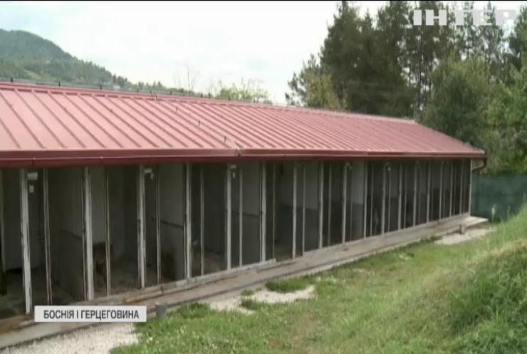 Собаки проти мін: у Боснії тварин тренують рятувати життя