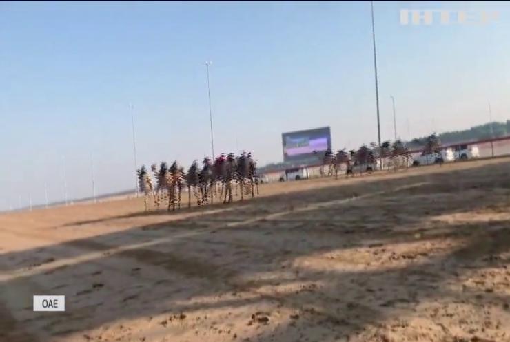 У Дубаї поновилися перегони верблюдів