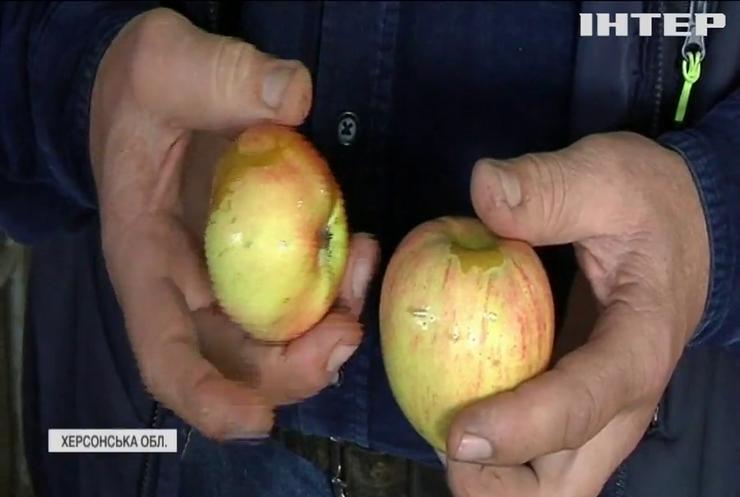 Негода нищить врожай яблук в Україні