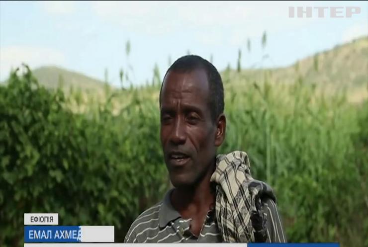 В Ефіопії сарана знищує сотні тисяч гектарів урожаїв