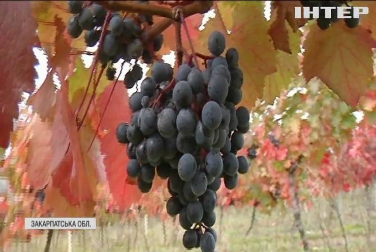 Українські винороби закликають підтримати вітчизняного виробника