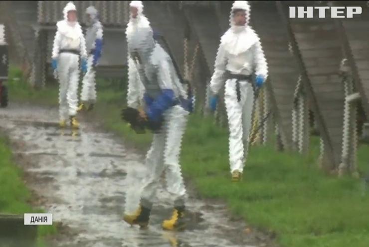 Новий штам COVID-19: у Данії на норкових фермах масово знищують тхорів