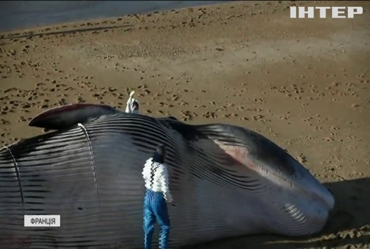 Біля французького узбережжя гинуть кити