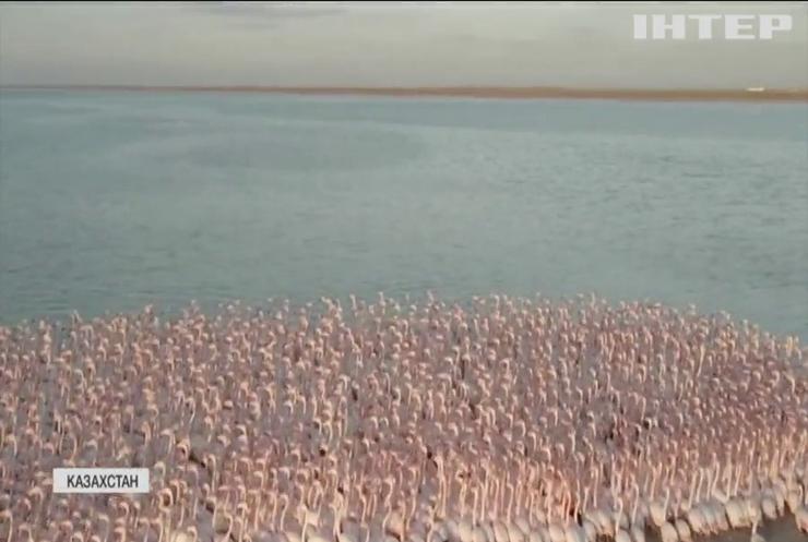 Озеро у Казахстані порожевіло від фламінго