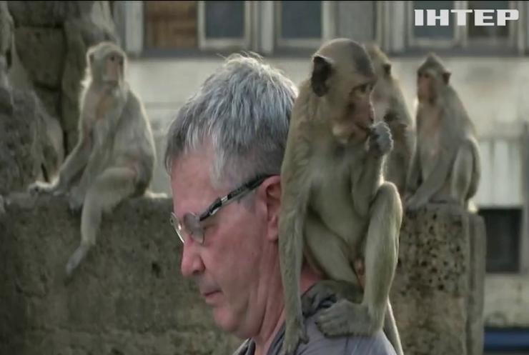 Класика для мавп: британський піаніст влаштував турне Таїландом