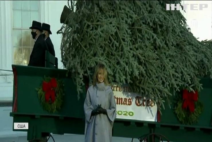 Перша леді США зустріла зустріла різдвяну ялинку
