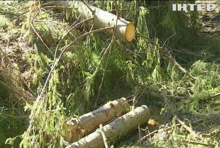 Країнам Карпатського регіону загрожує небезпека через вирубку лісів - ООН