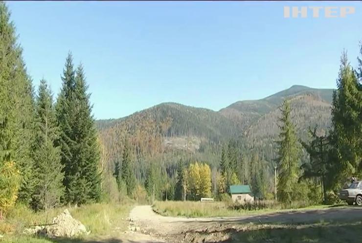 Карпати стрімко вмирають: в ООН попередили Україну
