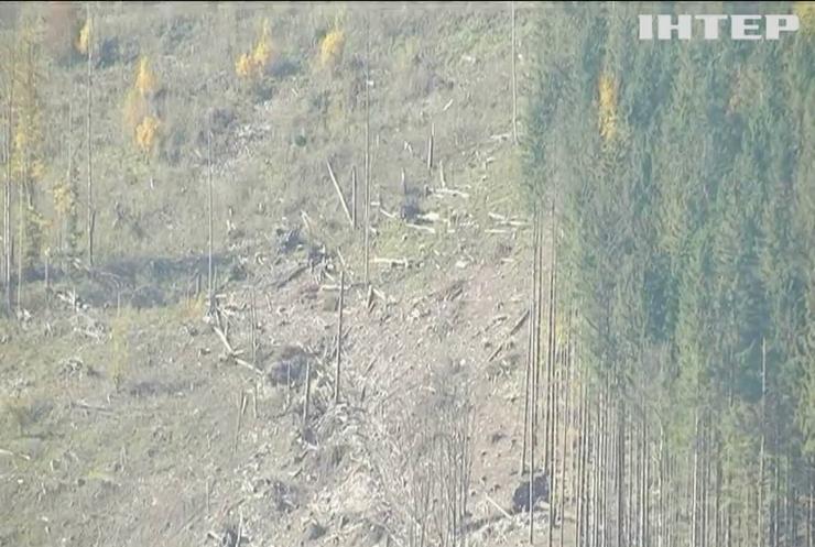 В ООН закликали боротися із вирубуванням лісів у Карпатах