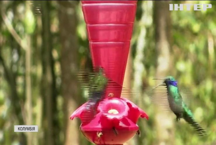 У столиці Колумбії відновили тропічний ліс заради колібрі