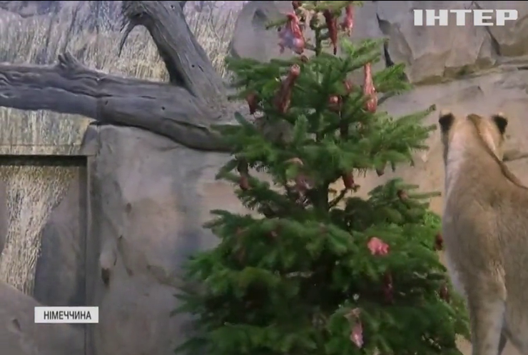 Мешканці берлінського зоопарку отримали новорічні подарунки
