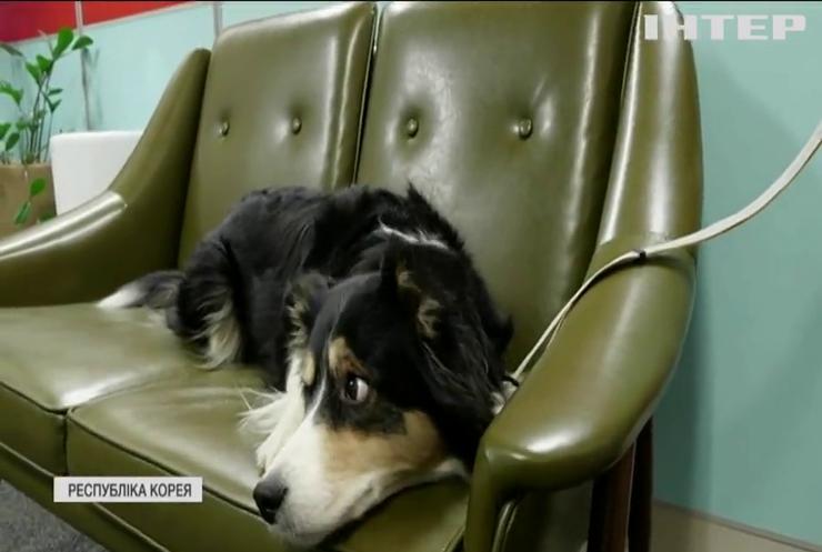 Корейці винайшли нашийник для зчитування емоцій собак