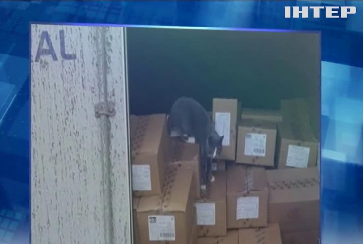 Солодкі мандри: кіт-нелегал три тижні добирався до Ізраїлю у контейнері з цукерками