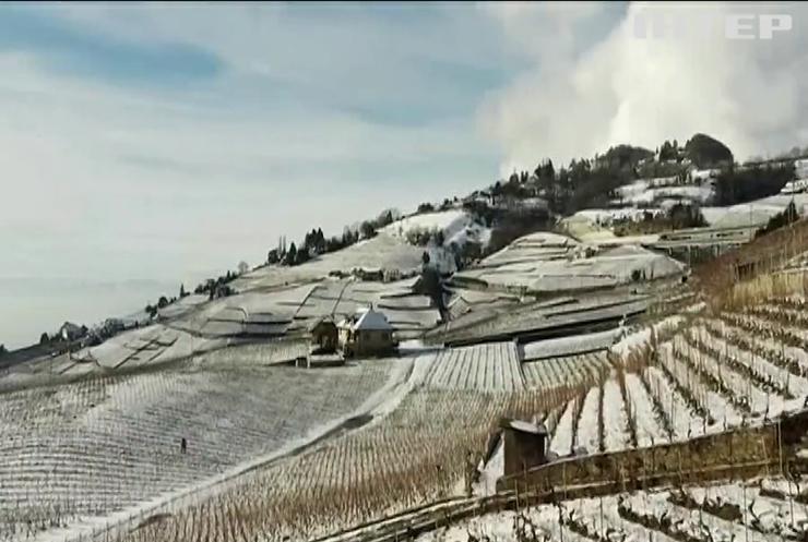Славетні виноградники Швейцарії покрилися снігом