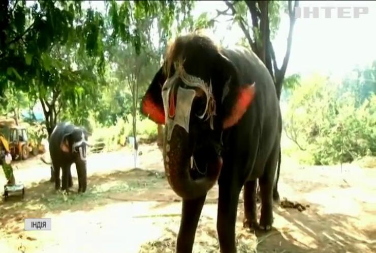 В Індії з монастиря відправили слонів на реабілітацію