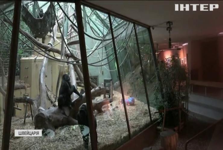 Тваринам Цюрихського зоопарку не вистачає уваги відвідувачів