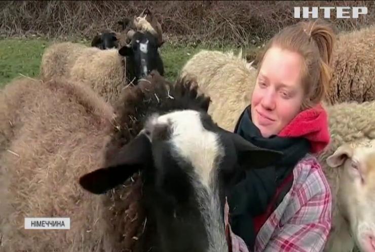 Обійми вівцю: у Німеччині запровадили незвичну антистресову програму