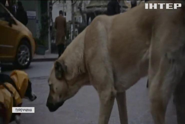 У Стамбулі зняли фільм про вуличних псів