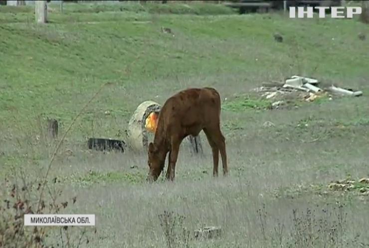 Земля розбрату: на Миколаївщині у селян відібрали єдине для випасання худоби пасовище