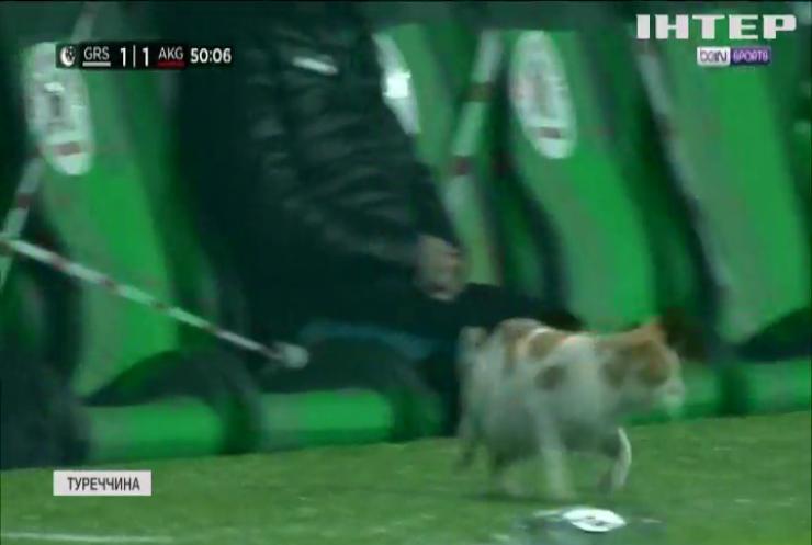 У Туреччині кіт мало не зірвав футбольний матч
