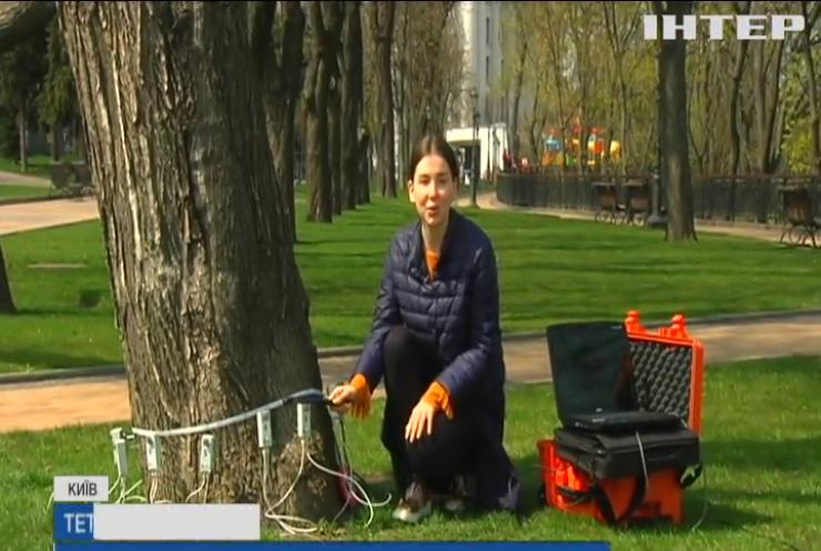 У Києві обстежують дерева за новітніми технологіями