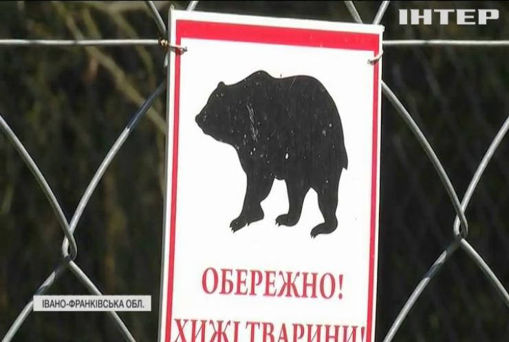 На Прикарпатті рятують трьох ведмедів від одного підприємства