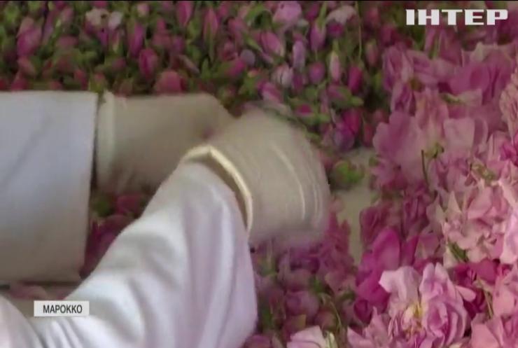 У Марокко почали збирати врожай червоних троянд