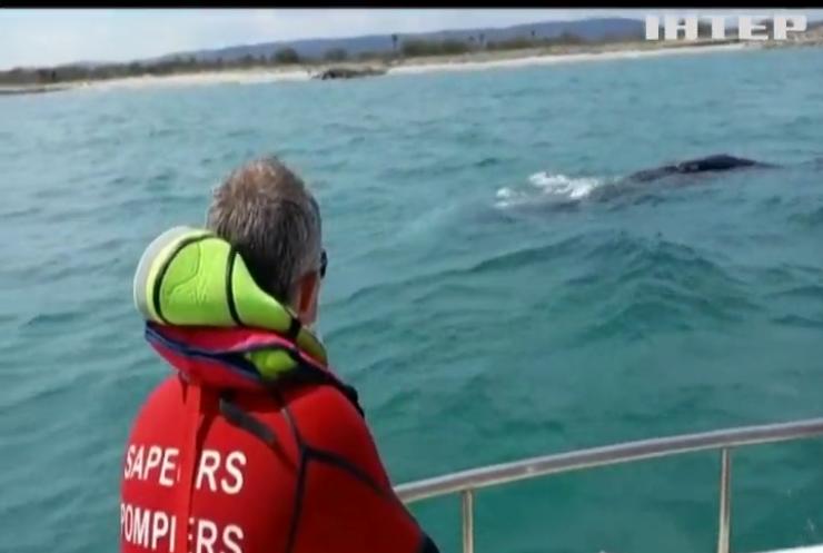 Тихоокеанський кит відвідав Середземне море