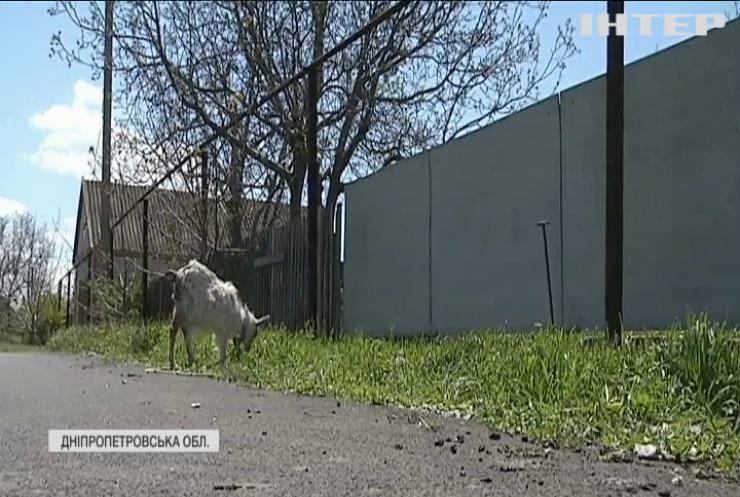 Траса з бур'янами: на Дніпропетровщині крізь новенький асфальт проросла трава