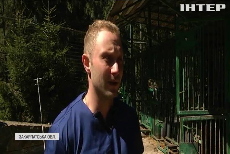 У Закарпатському реабілітаційному центрі провели медичний огляд ведмедів