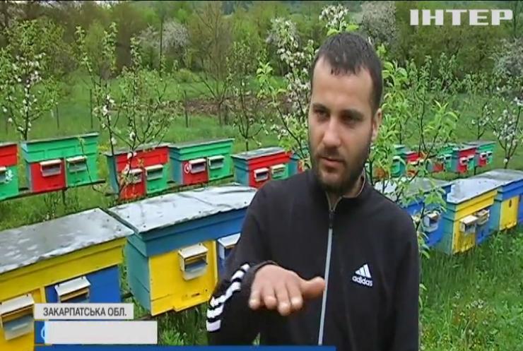 """Скандальне перевезення: на """"Укрпошті"""" воскресли мертві бджоли"""