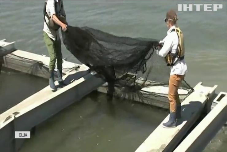 У Каліфорнії через посуху евакуюють мальків лосося