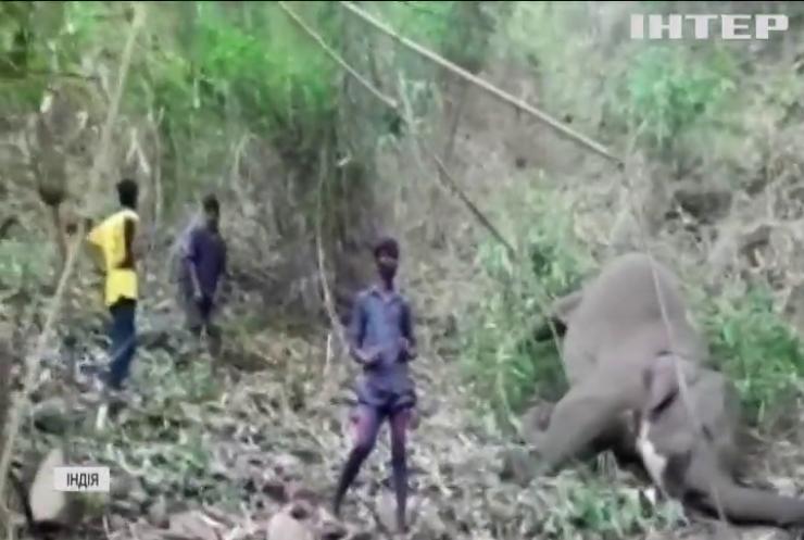 В Індії потужна блискавка вбила десятки слонів