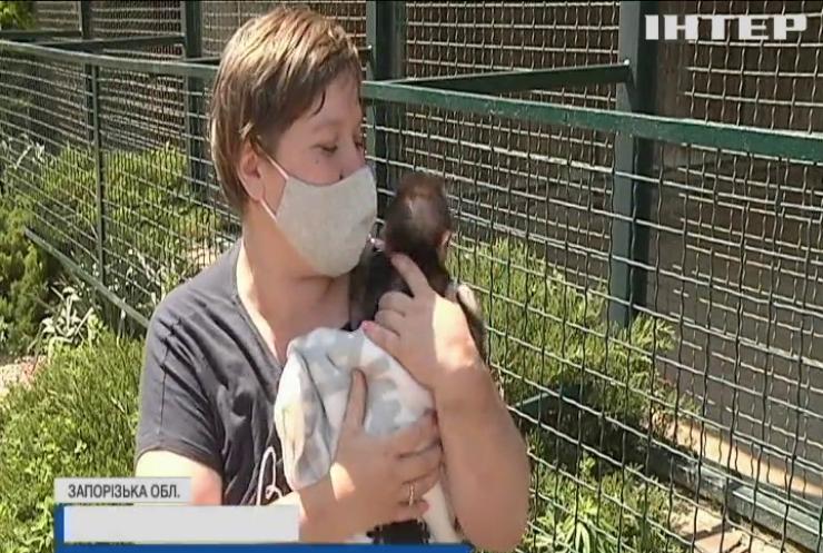Бердянський зоопарк поповнився малятами екзотичних тварин
