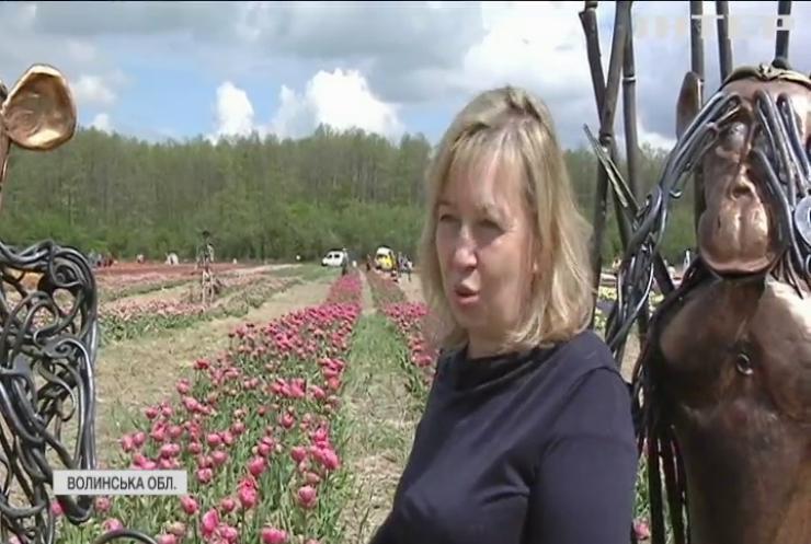 Тюльпанове море: на Волині стартував квітковий фестиваль