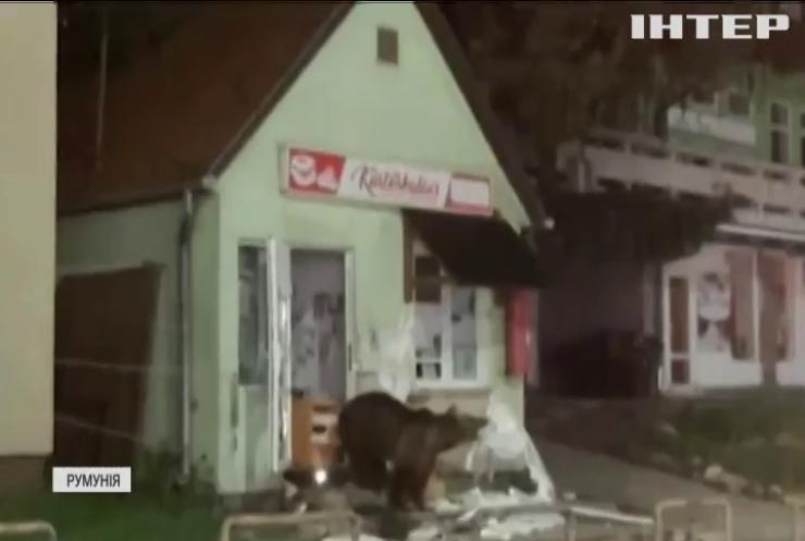 Голодні ведмеді тероризують жителів курортного містечка у Румунії (відео)